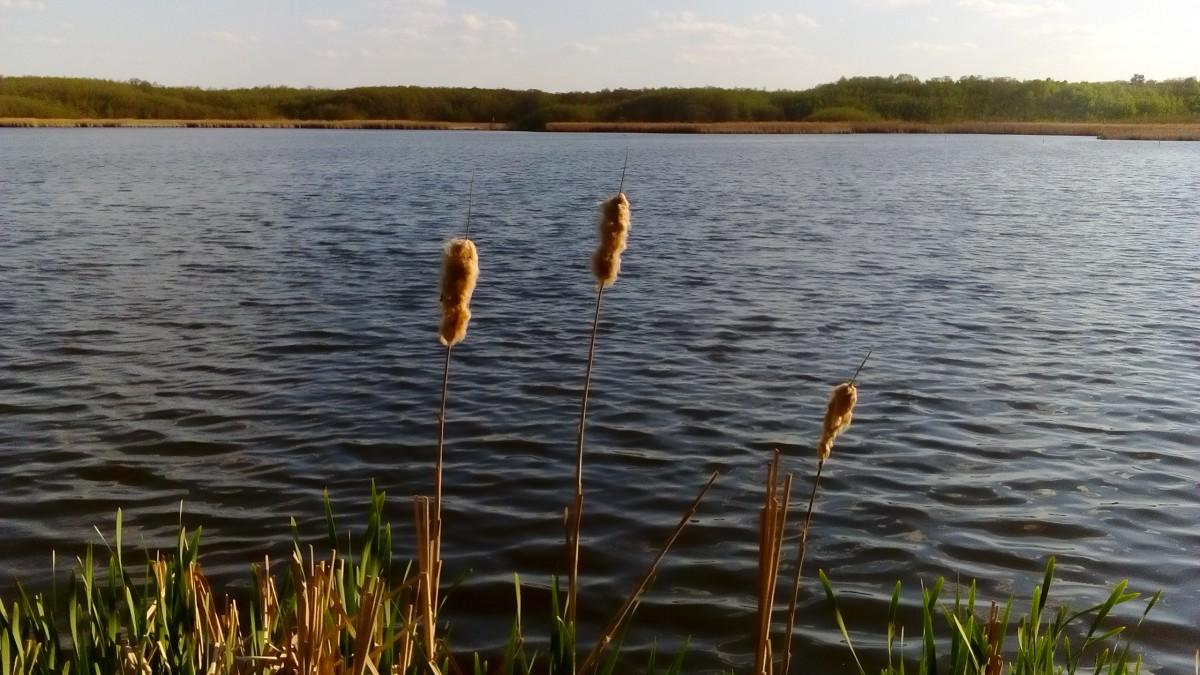 Zdjęcia: Krośnice, Dolina Baryczy, Przy brzegu, POLSKA