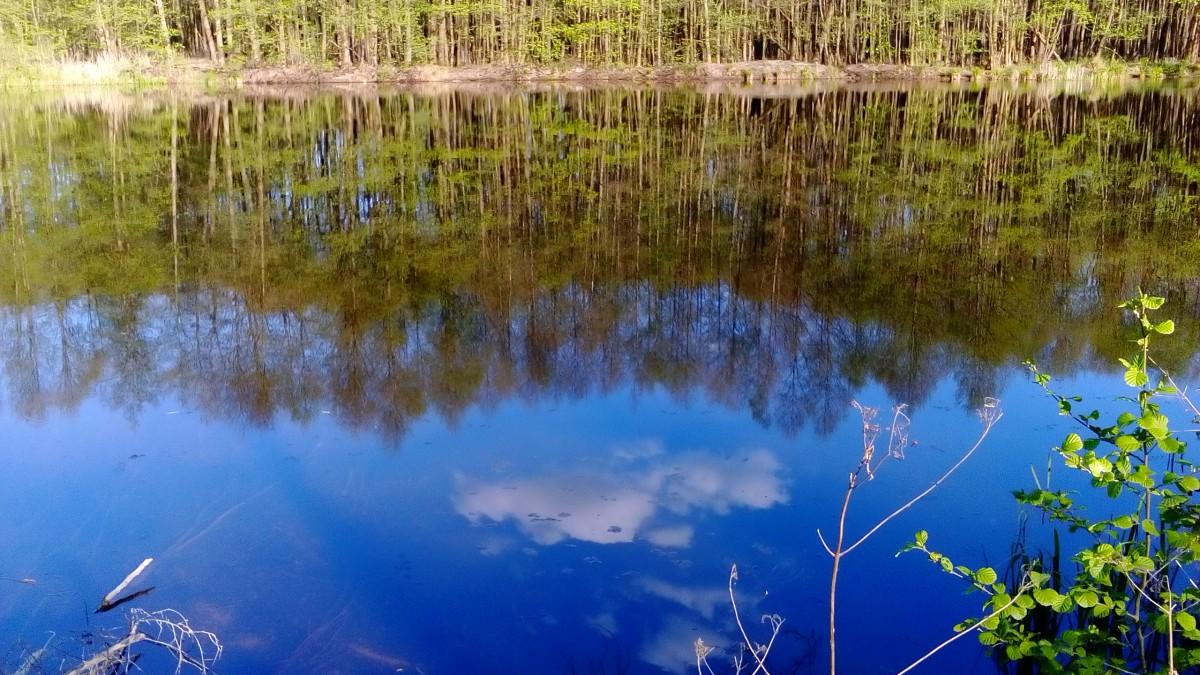 Zdjęcia: Krośnice, Dolina Baryczy, Lustro, POLSKA