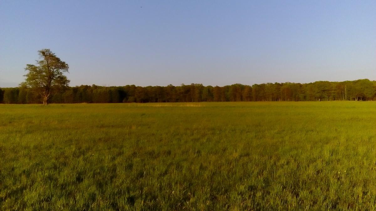 Zdjęcia: Krośnice, Dolina Baryczy, Majowa łąka, POLSKA