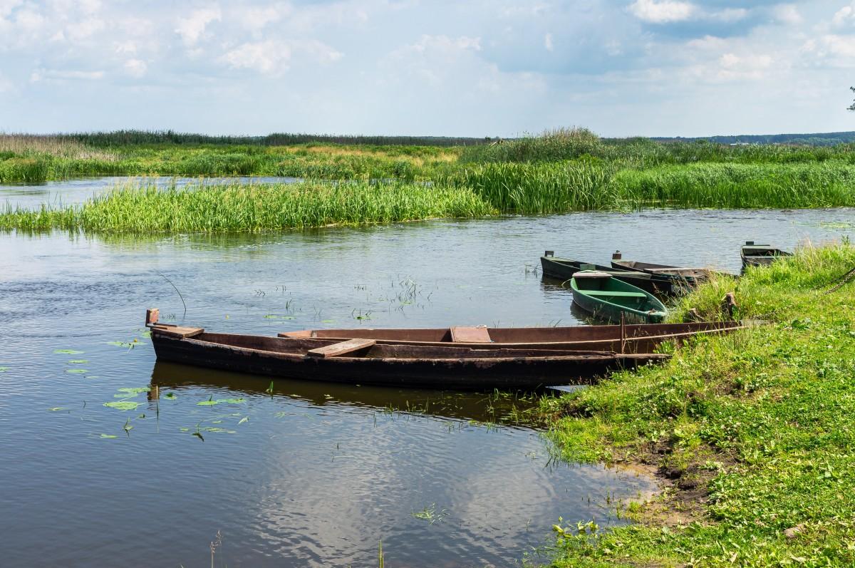 Zdjęcia: Waniewo, Narwiański Park Narodowy, Letnia Narew, POLSKA
