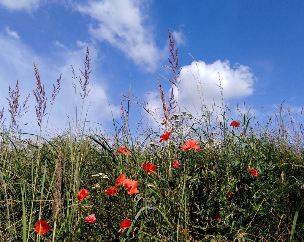 Zdjęcia: Sławików, śląskie, Kwietna łąka, POLSKA