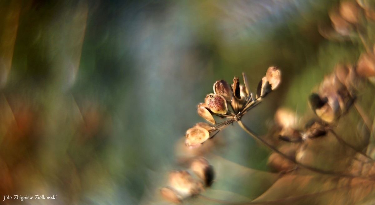 Zdjęcia: Nadnoteckie łęgi, Dolina Noteci, Dla tych co lubią przyrodę, POLSKA