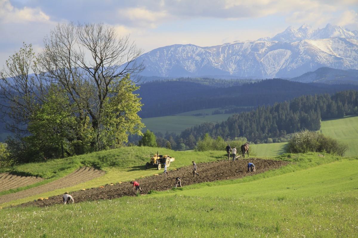 Zdjęcia: Pieniny, Małopolska, prace w polu, POLSKA
