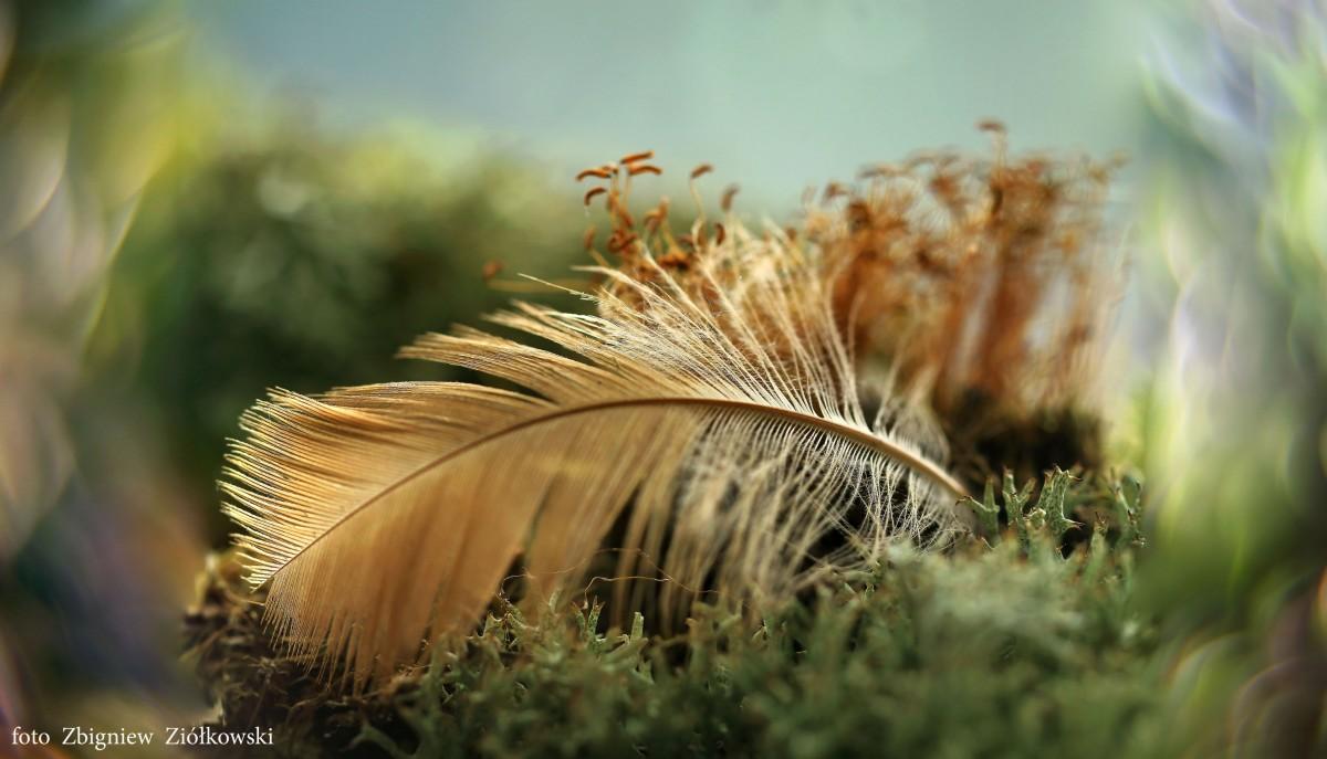 Zdjęcia: Nadnoteckie łęgi, Dolina Noteci, Setki kolorów piór, POLSKA