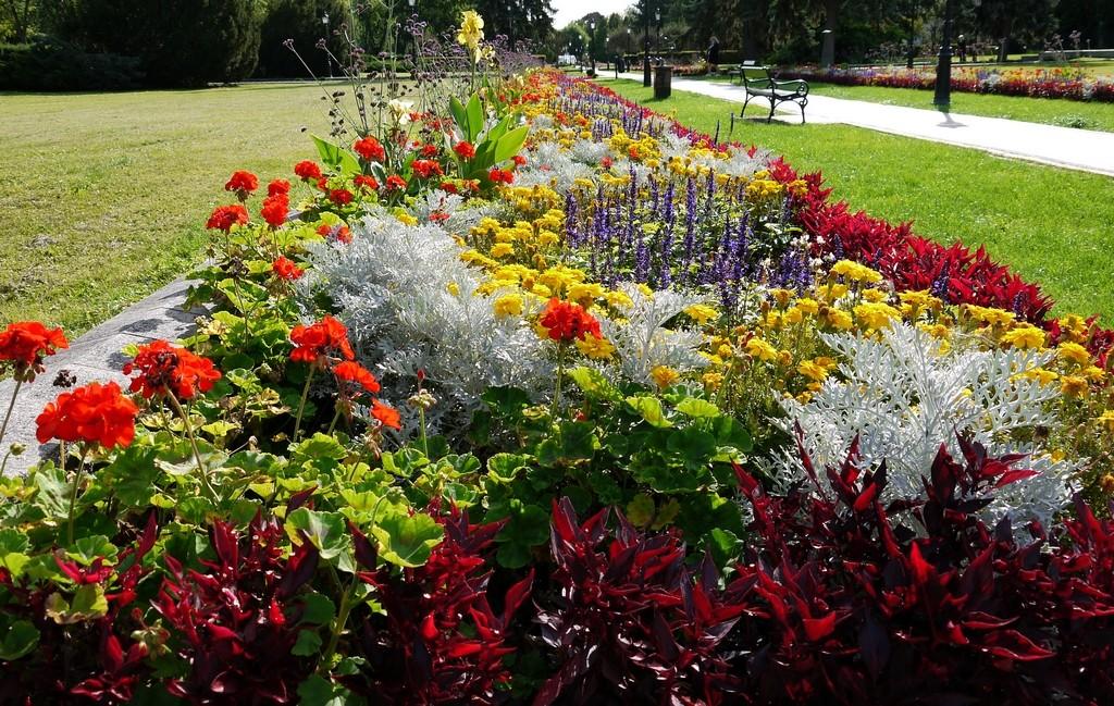Zdjęcia: Ciechocinek, kujawsko-pomorskie, Dywany kwiatowe, co roku inne., POLSKA