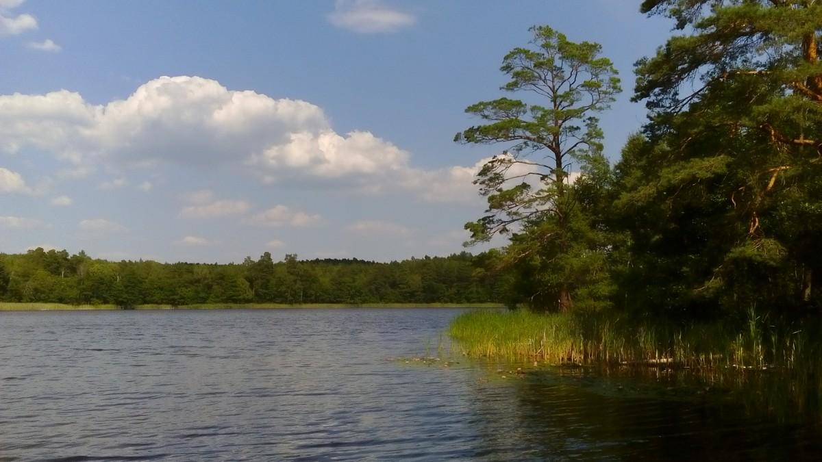 Zdjęcia: Dzierżążno Małe, Wielkopolska, Jezioro w środku lasu, POLSKA
