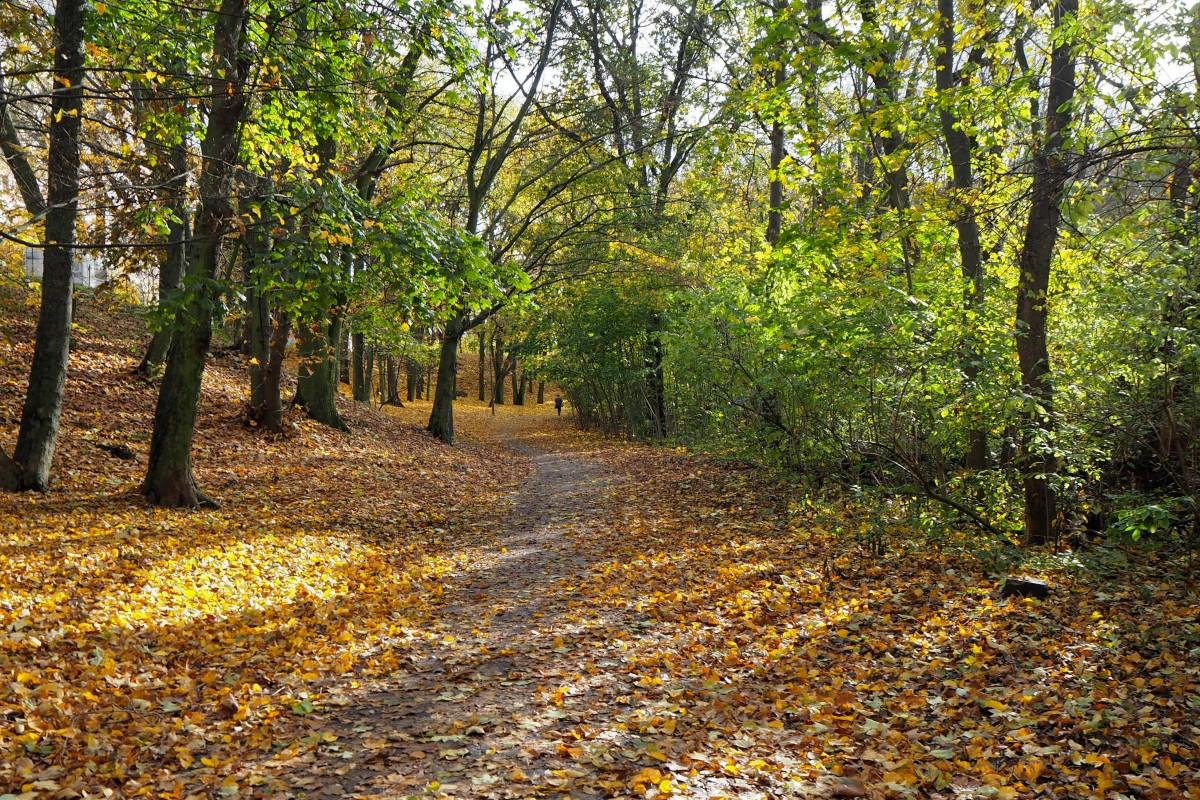 Zdjęcia: nad Wartą, Wielkopolska, promienna jesień..., POLSKA
