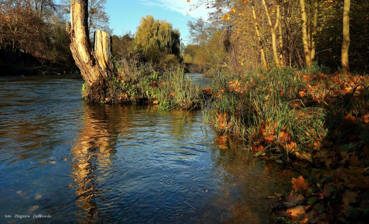Zdjęcia: Dolina Brdy, Bory Tucholskie, Jesień w Dolinie Brdy, POLSKA