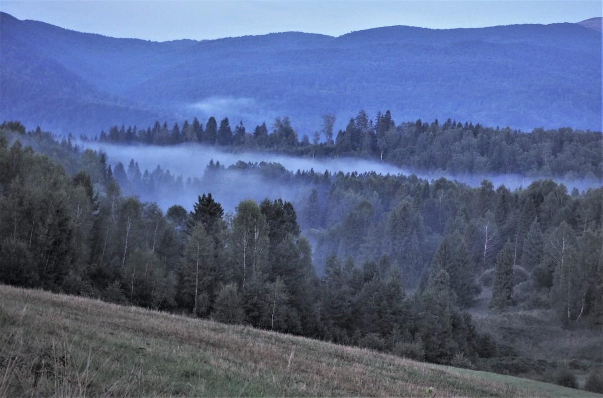 Zdjęcia: Strzebowiska, Bieszczady, pomiędzy drzewa się wlewa..., POLSKA