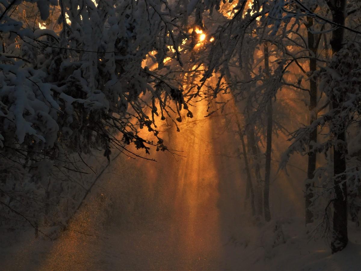 Zdjęcia: w drodze, Beskid Mały, spadający śnieg w promieniach słońca, POLSKA