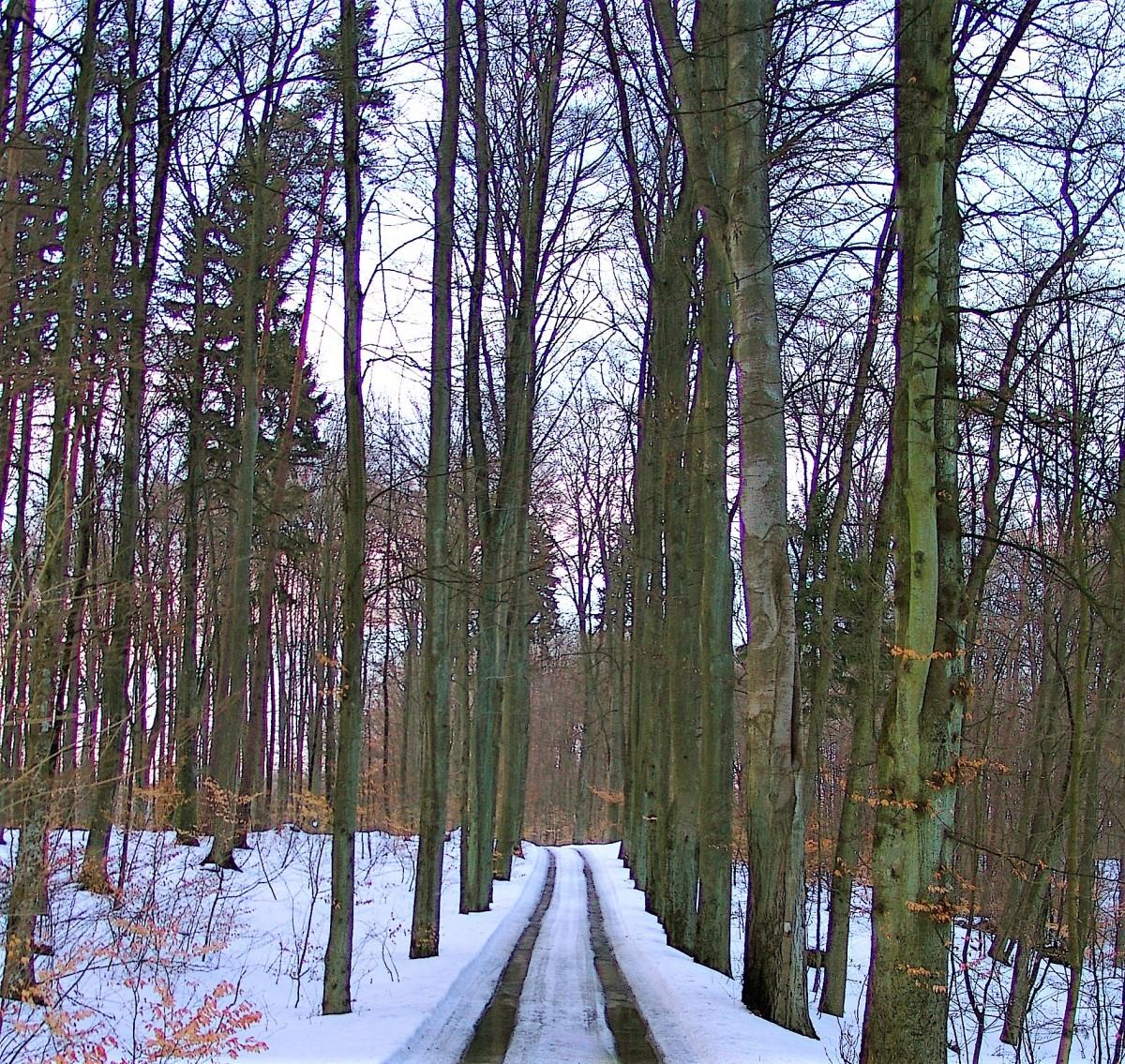 Zdjęcia: Trójmiejski Park Krajobrazowy, Pomorze, Droga, POLSKA