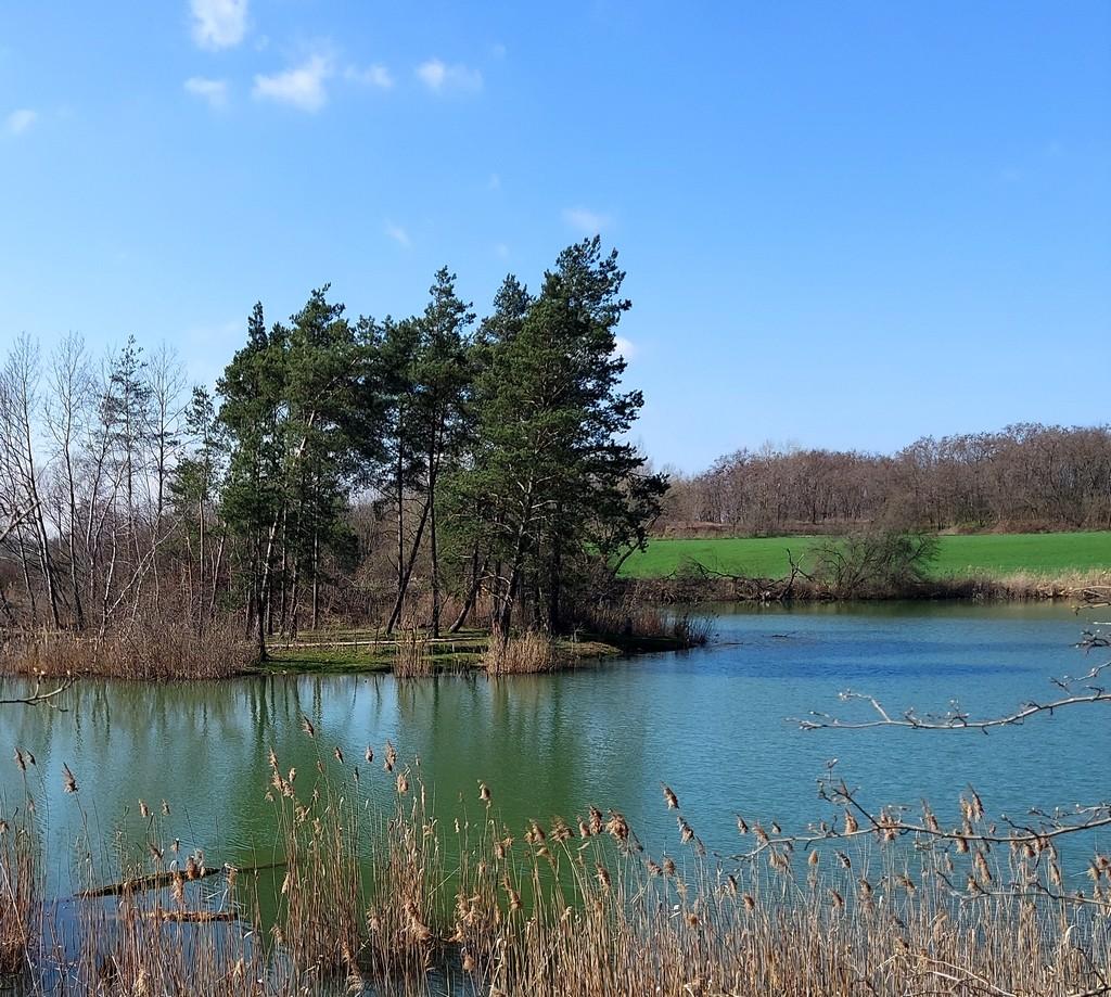Zdjęcia: Nowa Wieś, opolskie, Staw bobrowy wiosną, POLSKA