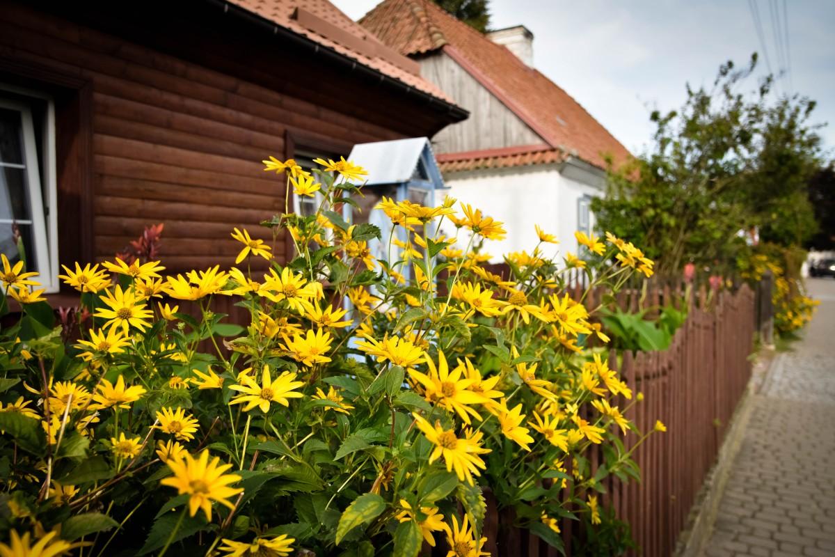 Zdjęcia: Tykocin, Podlasie, Kwiaty w Tykocinie, POLSKA