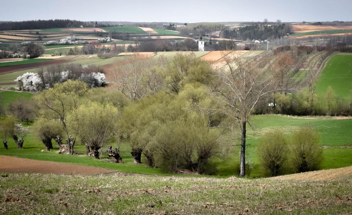 Zdjęcia: Czarnocin, Ponidzie, Ponidzie, POLSKA