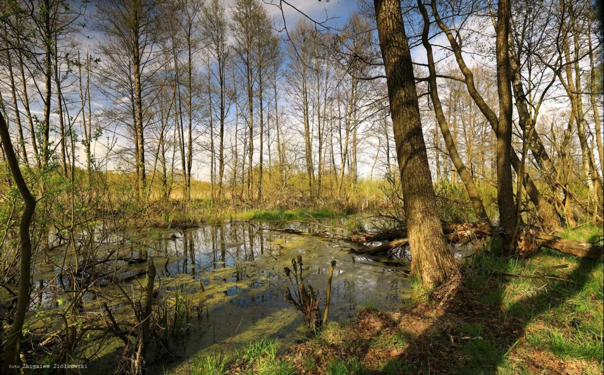 Zdjęcia: Puszcza Notecka, Dolina Noteci, Torfowiska w nadnoteckich łęgach, POLSKA