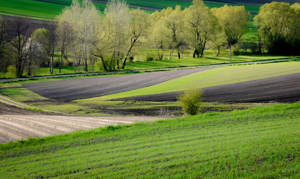 Zdjęcia: Ponidzie, Ponidzie, Wiosna na Ponidziu, POLSKA