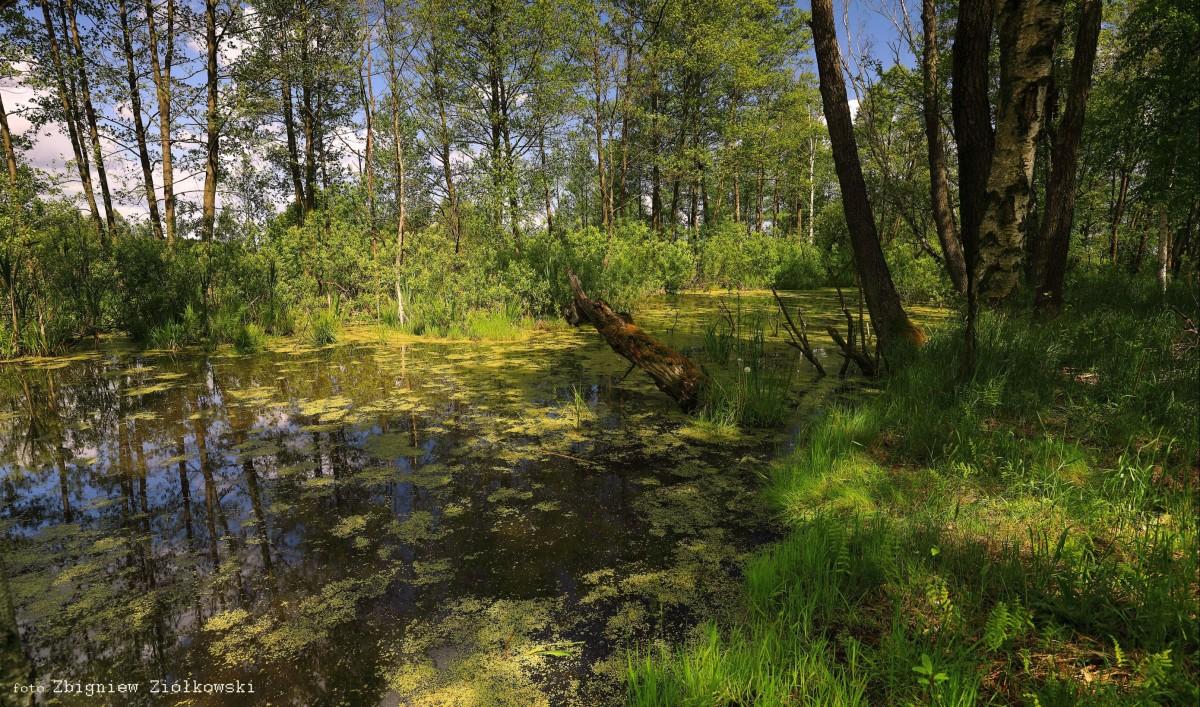 Zdjęcia: Nadnoteckie łęgi, Dolina Noteci, Torfowiska w nadnoteckich łęgach-4, POLSKA