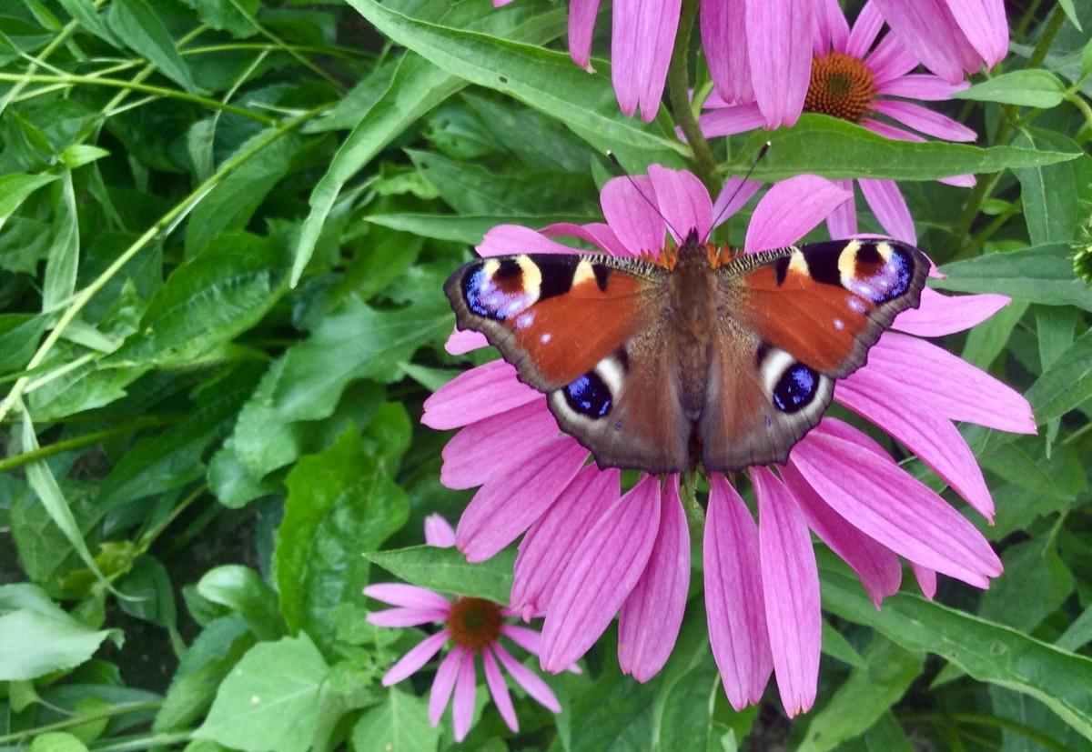 Zdjęcia: Ogród Botaniczny, Lubelszczyzna, Współpraca, POLSKA
