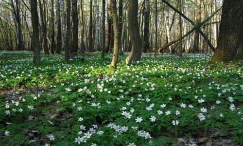 Zdjecie POLSKA / Mazowsze / Mazowiecki Park Krajobrazowy / Rezerwat