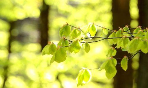 Zdjecie POLSKA / Pomorskie / Gdynia / Wiosna na drzewach