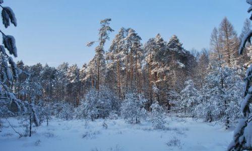 Zdjęcie POLSKA / -Bieszczady / Wetlina / Jeszcze powrót do zimy..