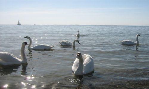 Zdjecie POLSKA / Gdynia / . / Łabędzie nad Bałtykiem