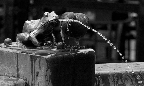 Zdjęcie POLSKA / kujawsko-pomorskie / Toruń / Ktoś tu o jakiś żabkach dziś mówił ;)