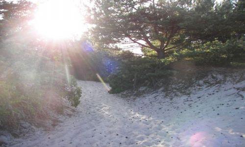 Zdjecie POLSKA / - / ustka / rozrośnięte drzewo