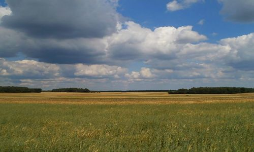 Zdjecie POLSKA / łodzkie / ... / Pola, pola... i chmury...