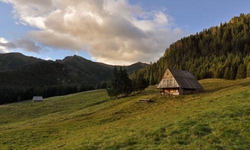 Zdjecie POLSKA / Góry / Tatry / Na polanie...