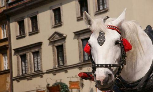Zdjecie POLSKA / Warszawa / Starówka / Warszawski koń