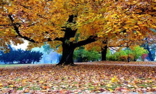 Zdjecie POLSKA / - / Łańcut / Jesień w parku
