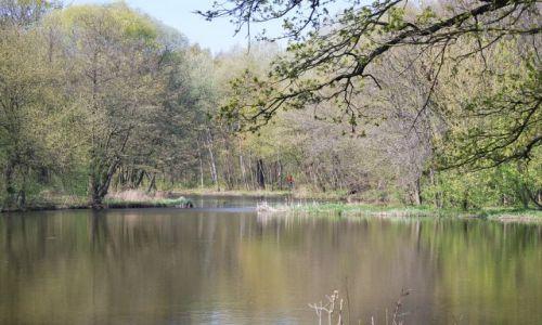 Zdjecie POLSKA / Wielkopolska / Las Dębina / Jezioro na wiosne
