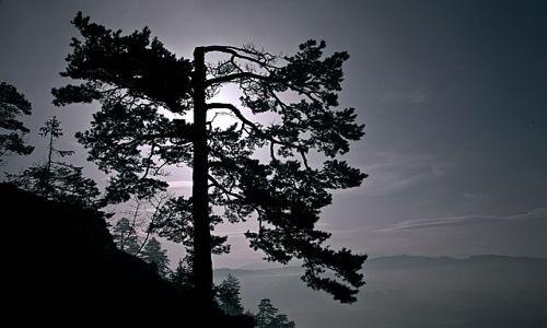 Zdjecie POLSKA / pieniny spiskie  / niedzica zbiornik czorsztynsk / czarne drzewo