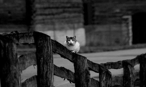 Zdjecie POLSKA / - / Podlasie / Wlazł kot na płot - perspektywa płotowa