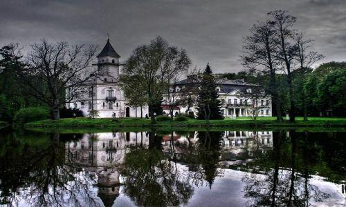 Zdjęcie POLSKA / Mazowsze / Radziejowice / W Radziejowicach