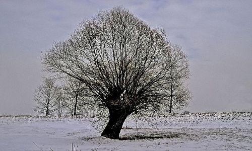 Zdjecie POLSKA / - / Gdzieś na Bugiem / Drzewo zimą