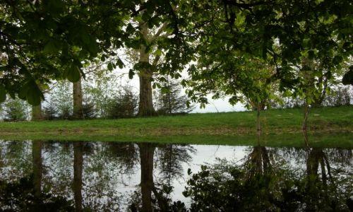 Zdjęcie POLSKA / Mazury / Mazury / Drzewa