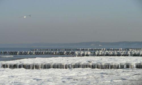 Zdjęcie POLSKA / Ustka / nad morzem / W szarudze zimowego dnia....