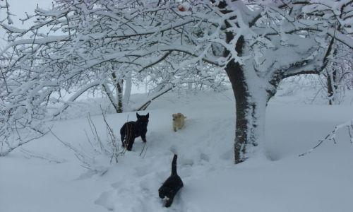 Zdjecie POLSKA / Mazury / Mazury / Ale śniegu...