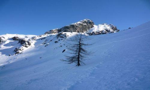 Zdjecie POLSKA / ,, / .. / Tatry zimą i samotne drzewo
