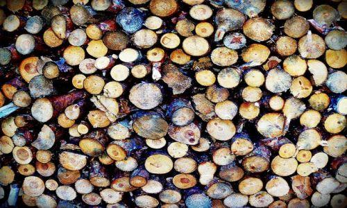 Zdjęcie POLSKA / Ziemia Lubuska / Gdzies w lesie / A w tartaku koloru moc