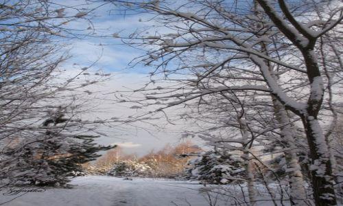 Zdjecie POLSKA / Mazowsze / Las Kabacki / Zimowy pejzaż