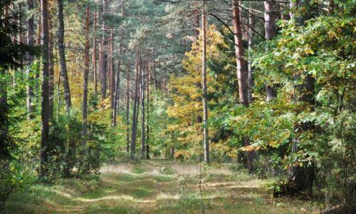 Zdjęcie POLSKA / Augustowszczyzna / Puszcza Augustowska / Jesień w Puszczy Augustowskiej
