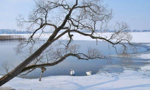 Zdjecie POLSKA / województwo podlaskie / Jezioro Rajgrodzkie / Uroki zimy