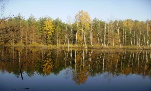 Zdjecie POLSKA / Mazowieckie / okolice Warszawy / jesień w Mazowieckim Parku Krajobrazowym