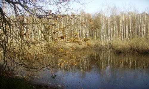 Zdjecie POLSKA / Mazowieckie / okolice Warszawy / pejzaż jesienny