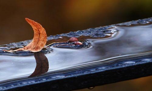 Zdjecie POLSKA / łódzkie / ... / Ku jesieni.... żagielek lipowy