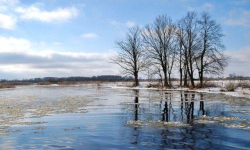 Zdjęcie POLSKA / Dolina Biebrzy / Z mostu w Debowie / Zimowa Biebrza