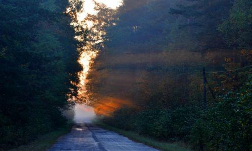 Zdjecie POLSKA / - / Lasy Janowskie / O świcie